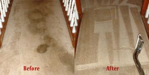 Desert Carpet Cleaners Treats Pet Stains And Odors That Have Blemished Your Carpets Rugs Upholstery With Our Stain Odor Removal Service